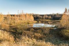 La tierra baja pantanosa es rodeada por los abedules, el bosque y la hierba seca Fotografía de archivo