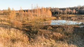 La tierra baja pantanosa es rodeada por los abedules, el bosque y la hierba seca Fotos de archivo