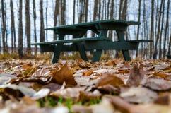 La tierra cubrió a Autumn Leaves de oro Foto de archivo libre de regalías