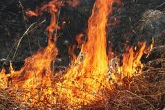 La tierra salvaje el fuego imágenes de archivo libres de regalías