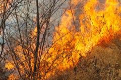 La tierra salvaje el fuego foto de archivo