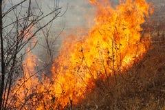 La tierra salvaje el fuego foto de archivo libre de regalías