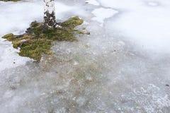 La tierra se cubre con el tronco del hielo y del abedul Foto de archivo
