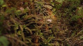 La tierra se cubre con la hierba y los helechos hermosos cubierta de la hierba de la tierra metrajes