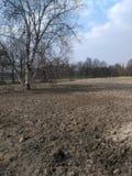 La tierra seca Foto de archivo