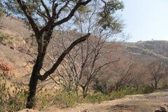 La tierra seca y el bosque salvaje durante verano en Ranthambhore parquean Fotografía de archivo