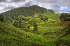 La tierra verde Fotos de archivo libres de regalías
