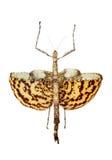 la tige colossale d'insecte a formé Photos libres de droits