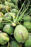 La tige de la noix de coco au-dessus de la batterie des noix de coco Photographie stock