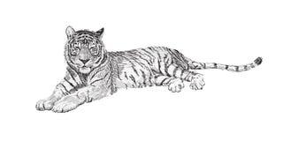 La tigre si trova, disegno in bianco e nero della grafica vettoriale di schizzo Fotografie Stock