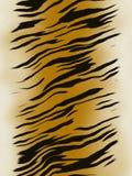 La tigre stria la priorità bassa Fotografie Stock Libere da Diritti