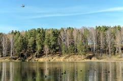 La tira de bosque mezclado en la orilla del lago Fotografía de archivo libre de regalías