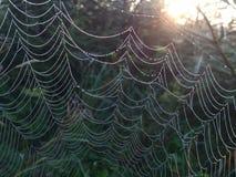 La toile d'araignée photos stock