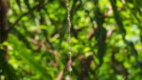 La toile d'araignée dans la nature Photographie stock libre de droits