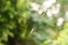La toile d'araignée Photographie stock