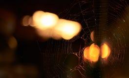 La toile de l'araignée a éclairé au coucher du soleil extérieur le soir, fond brouillé image libre de droits
