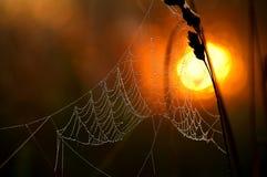 La toile de l'araignée Photo libre de droits