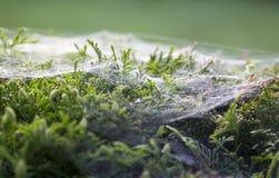 La toile de l'araignée Photo stock