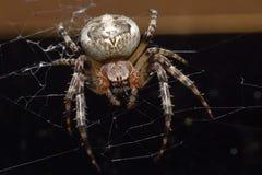 La toile de l'araignée Image stock