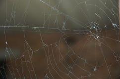 La toile de l'araignée Images stock