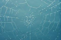 La toile de l'araignée avec la rosée Images stock