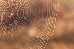 La toile de l'araignée dans la lumière de coucher du soleil Photographie stock libre de droits