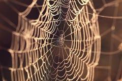 La toile de l'araignée dans la lumière de coucher du soleil Photo libre de droits