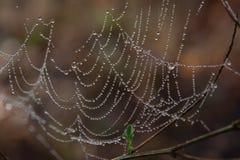 La toile de l'araignée de matin Images stock