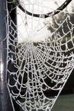 La toile de l'araignée givrée Photos stock