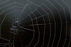 La toile de l'araignée sur le noir Photographie stock libre de droits