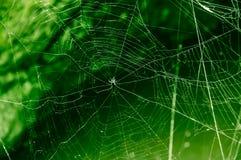 La toile de l'araignée sur le vert Images stock