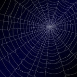 La toile de l'araignée. Vecteur. Photo libre de droits