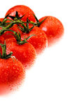 La tomate couverte de rosée Photos libres de droits
