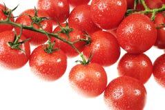 La tomate couverte de rosée Photographie stock
