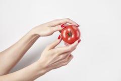 La tomate de légume frais chez les mains du ` s de la femme, doigts avec les ongles rouges manicure, d'isolement sur le fond blan Photographie stock