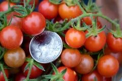 La tomate exotique de marais photographie stock