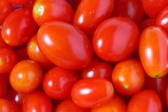 La tomate fraîche rouge de reine Photos stock