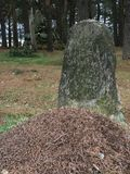 La tomba nel vecchio cimitero dei soldati della prima guerra mondiale 1916 anni Fotografia Stock Libera da Diritti
