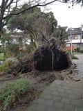 La tormenta del invierno dañó dos árboles en la ciudad de la guarida aan IJssel del nieuwerkerk en los Países Bajos Imagen de archivo