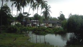 La tormenta y la lluvia en el viento tropical de Asia sacude las palmas metrajes