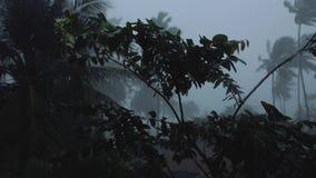 La tormenta y la lluvia en el viento tropical de Asia sacude las palmas almacen de video