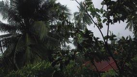 La tormenta y la lluvia en el viento tropical de Asia sacude las palmas almacen de metraje de vídeo