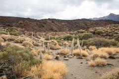 La torre de joyas seca los esqueletos en Tenerife, España Imagenes de archivo