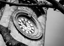 La torre di orologio del museo di Horniman Fotografia Stock Libera da Diritti