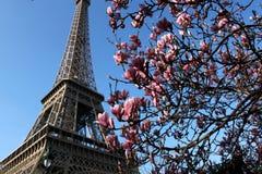 La torre Eiffel y una rama de la magnolia Fotos de archivo