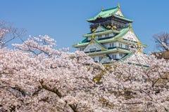 La torre principale di Osaka Castle sopra il fiore di ciliegia fiorisce la vista da Sakura Nishinomaru Garden Immagini Stock Libere da Diritti