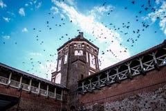 La torre, uccelli nel cielo, uccelli vola nel cielo sopra la torre Fotografie Stock