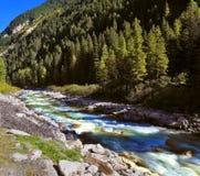 La torrente montano delle foreste di conifere Fotografia Stock