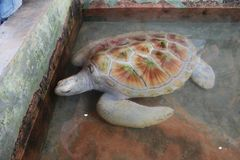 La tortue de mer nage dans l'océan ouvert La tortue est brune Image stock