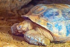 La tortue de terre Photographie stock libre de droits